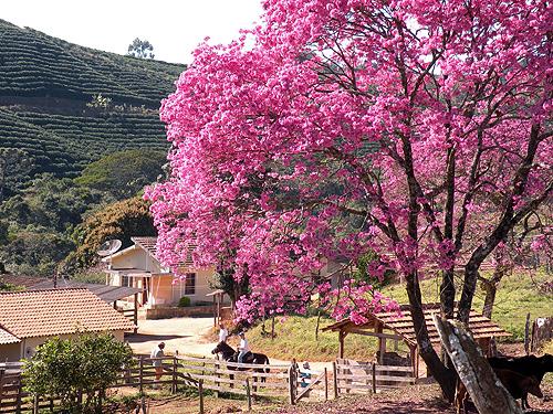 カルモ農園