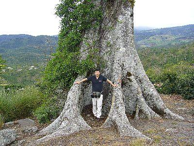 アキアレスの大木